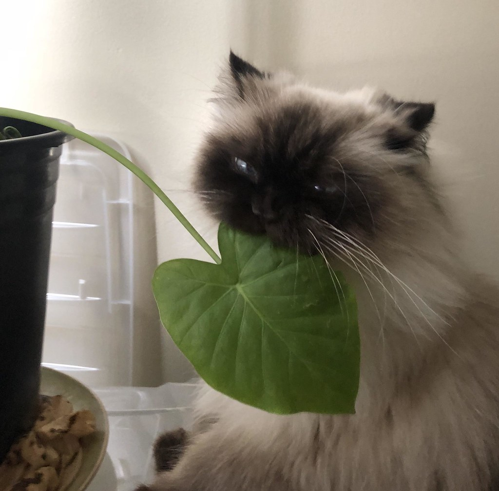 This is Fish, the 15 y o  Craigslist cat  He eats plants