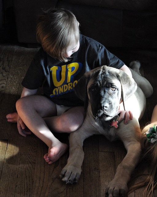 Best Dogs for Kids with Down syndrome