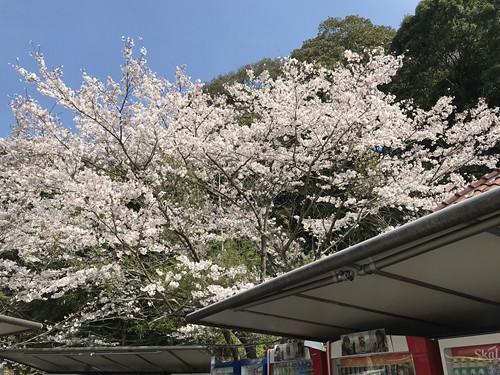 michinoekiyamaguchi009