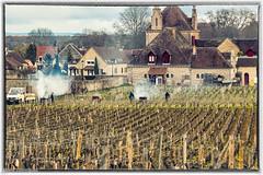 Route des Grands Crus (Bourgogne) 29 Mars 2018