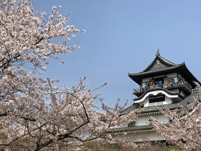 犬山城と桜 IMG_0208_2