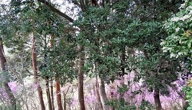 濱松花卉主題公園 (5)
