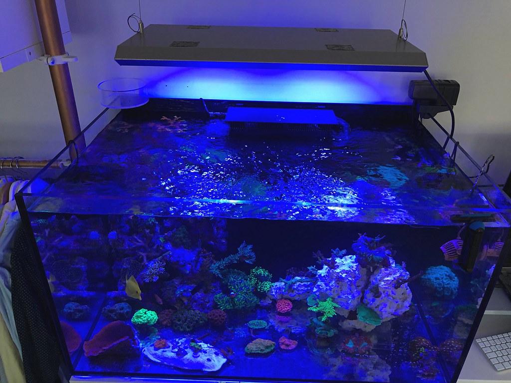Reef tank 2018-03-16