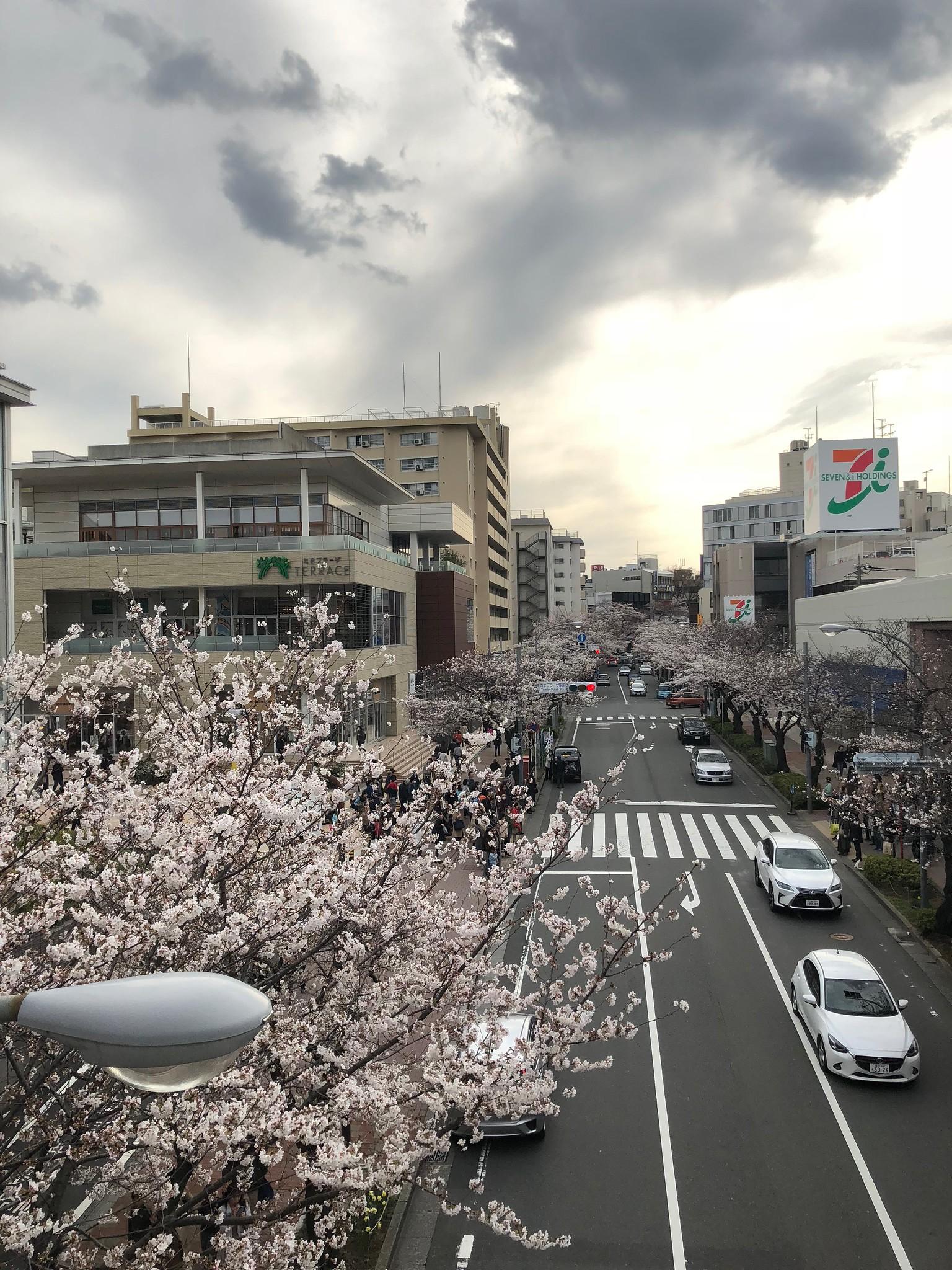 Sakura tour 2018