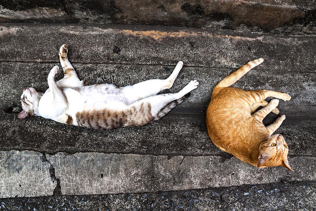 Two cats--Chanthaburi