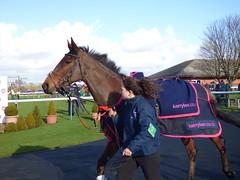 Bangor Races
