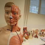 Anatomi Laboratuvarı 6
