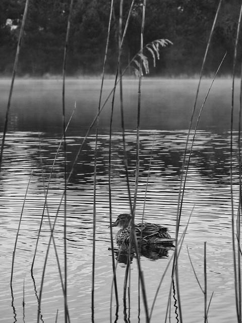 wake up on a hazy pond - réveil sur un étang brumeux