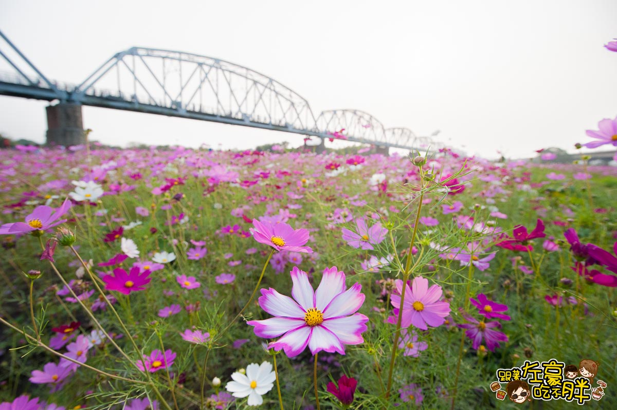 舊鐵橋(屏東端)花海-13
