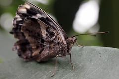 Papillons en Liberté 2018 - Photo 20