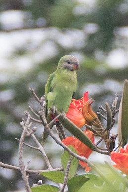Parakeet (1 of 11)