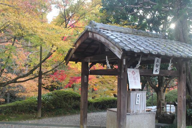 imakumanokannonji-koyo041