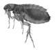 Pest Control Manchester NH