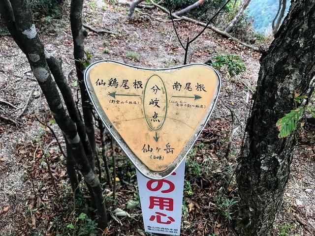 仙ヶ岳 東峰 南尾根・仙鶏尾根分岐