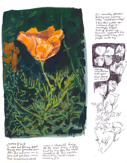 Sketchbook #112: California Poppies