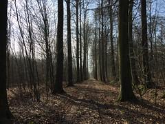 Fleury-la-Forêt06
