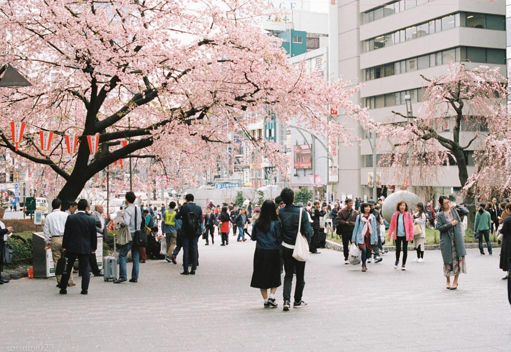 2018-03-17 上野公園桜模様 KODAK PORTRA 160 002