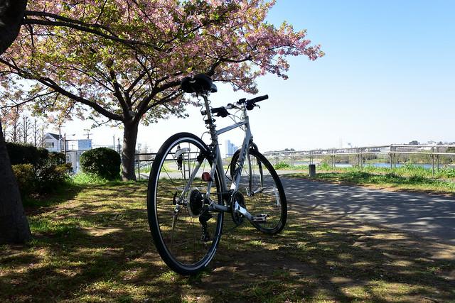 Escape Airと多摩川の桜