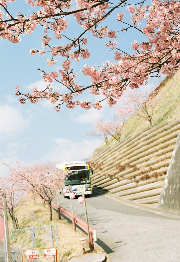 2018-03-17 河津桜とPORTRA160 004