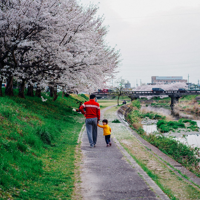 CherryBlossoms_205