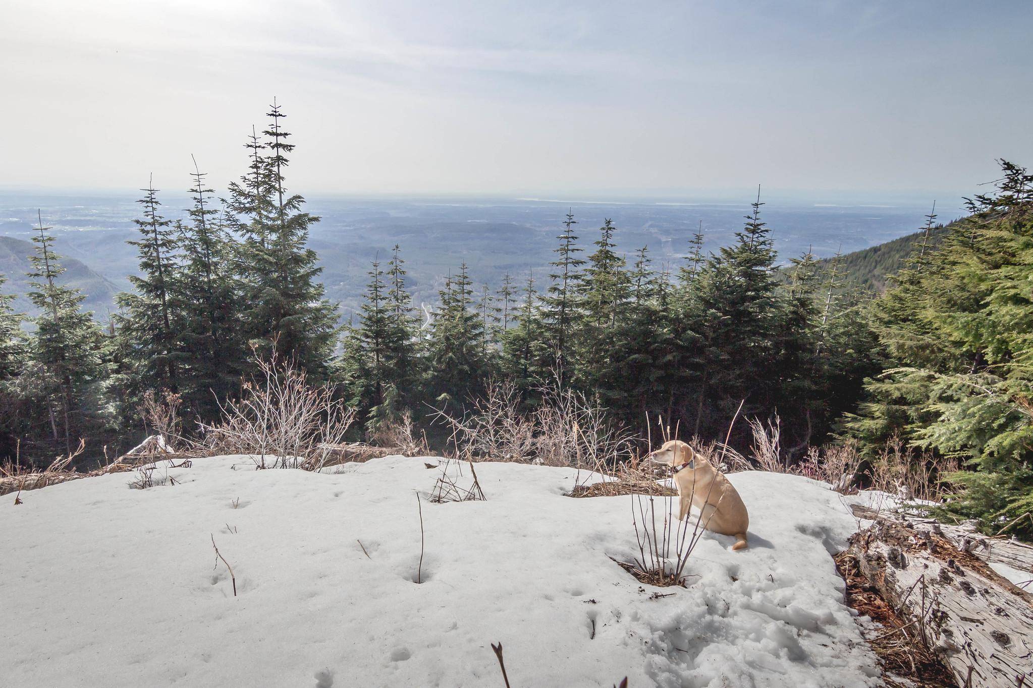 Summit dogs on McDonald Mountain