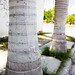 Royal Palm Trees por Shane Adams Photography