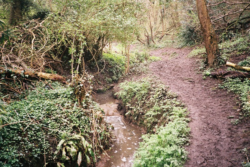 Slippery paths, Coombe Valley
