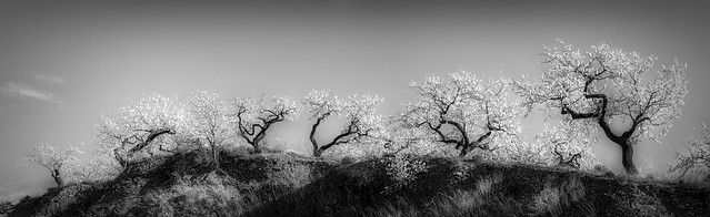 Photo:Almond Ridge By MarkC333