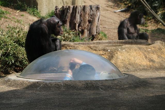 茨城県 日立市 かみね動物園