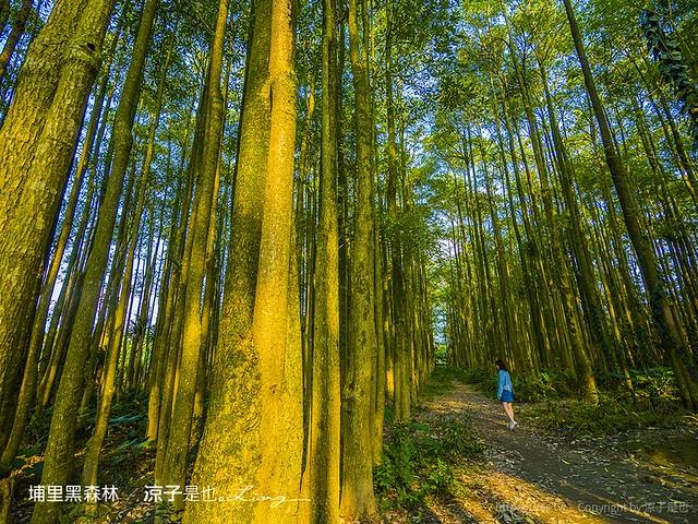 埔里黑森林 1