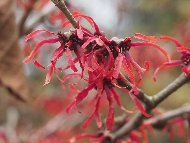 Sat, 2018-02-24 13:03 - Brooklyn Botanic Garden