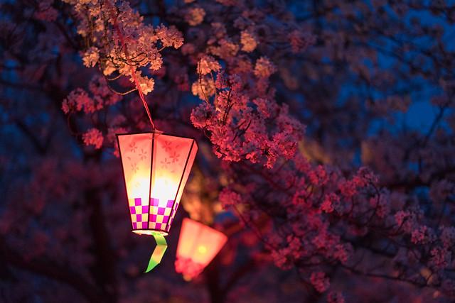 CherryBlossoms_36