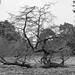 Kew - 15032018-1599.jpg