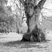 Kew - 15032018-1632.jpg