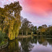Weeping Willow Under Red Skies.