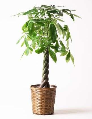 観葉植物は必要? (1)