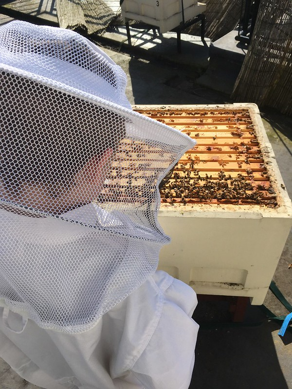 1c2a650799ac1 I was also really pleased to finally get hold of an enormous plastic box  that is large enough to submerge a whole 14×12 brood box in. Our roof top  hives are ...