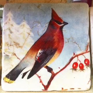 #henribanks #birds #marblebirds