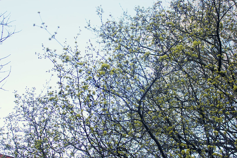 April knopppar