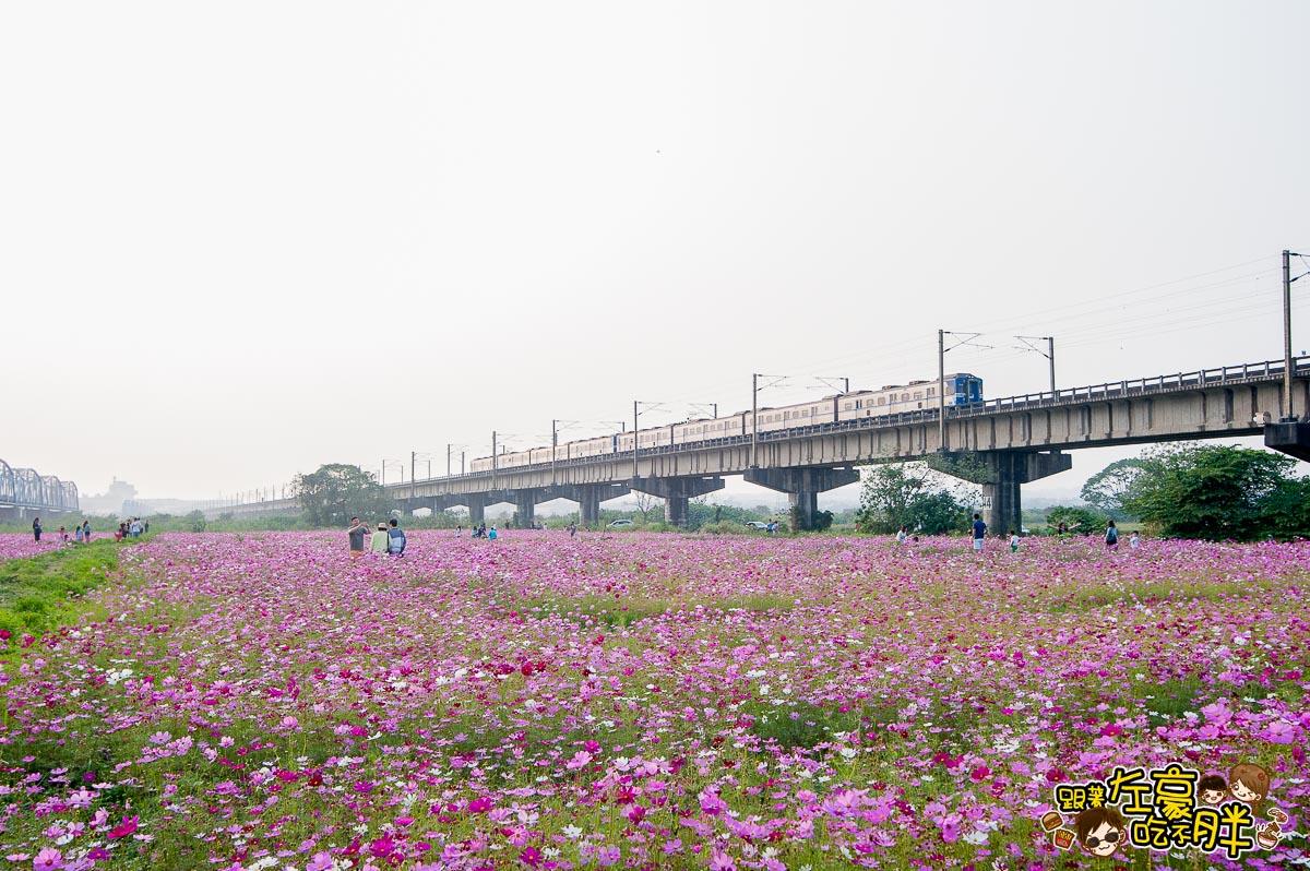 舊鐵橋(屏東端)花海-15