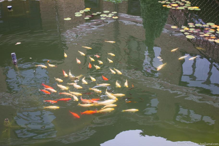 Романковская усадьба: рыбки