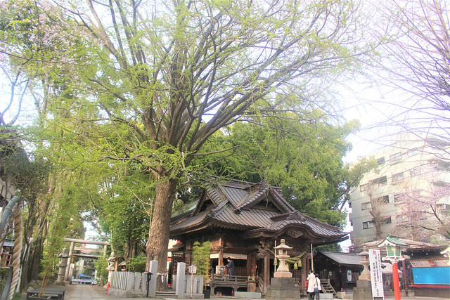tanashijinja-gosyuin03083
