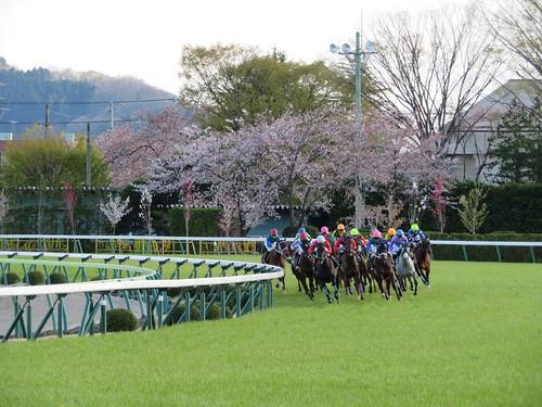 福島競馬場の桜をバックに馬が駆ける