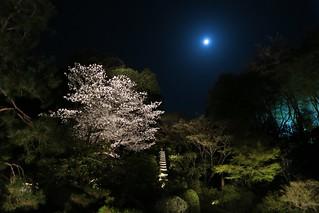 Night illumination at Shoren-in temple