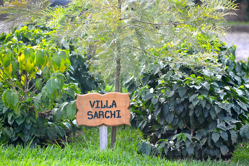 Giong ca phe Villa sarchi