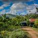 Plantation near Rio Anamuyita - Higuey Dominican Republic