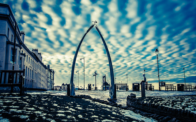 Whitby whale bones-09550