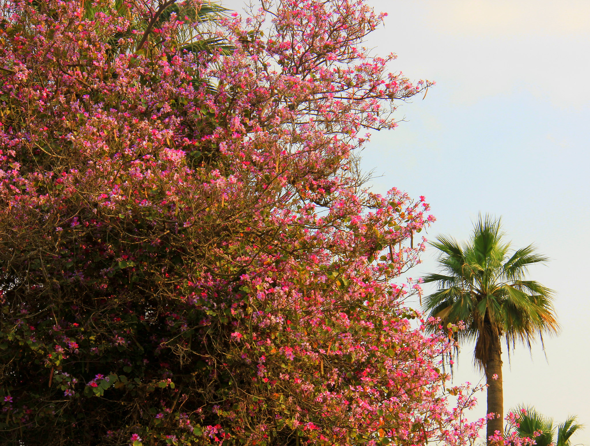 Cairo spring paints the town in floral colours