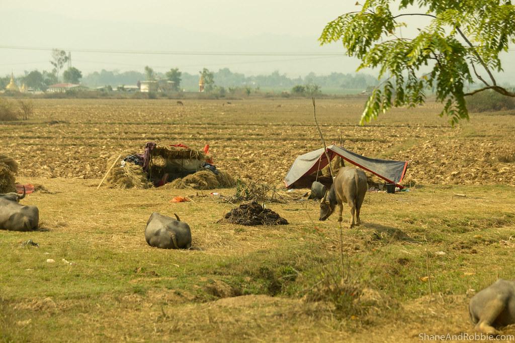 Myanmar-20180325-1384