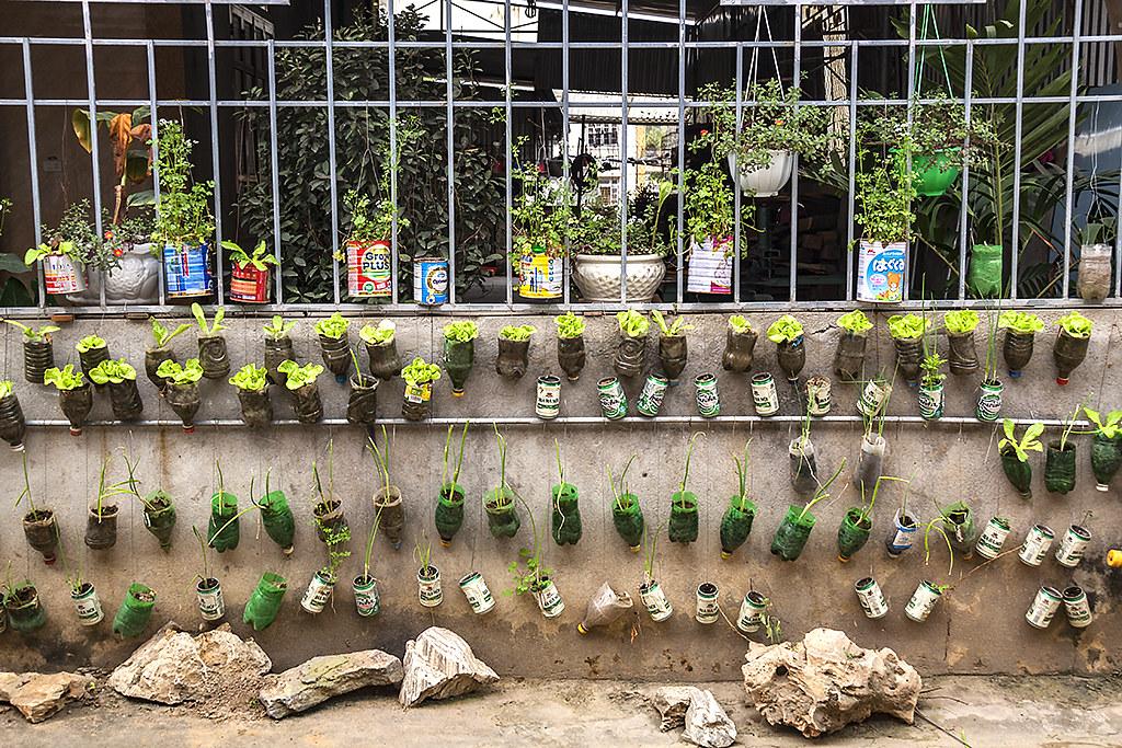 Home gardening--Quy Hop 2